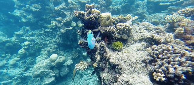 Maldive a Pasqua: Atollo Male Sud - Journeydraft - barriera corallina maldive