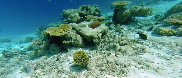 Maldive a Pasqua: Atollo Male Sud - Journeydraft - coralli maldive