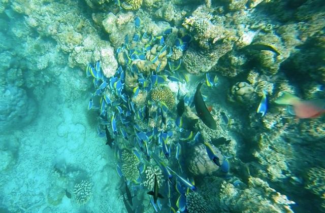 Maldive a Pasqua: Atollo Male Sud - Journeydraft - pesci barriera corallina maldive