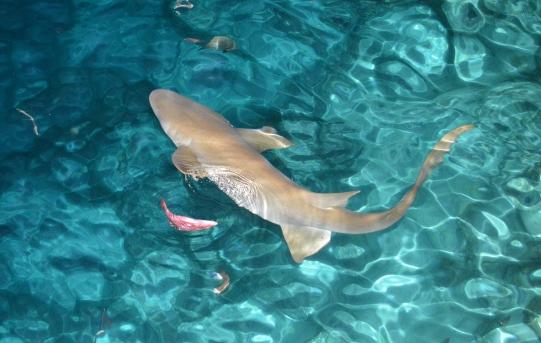 squali barriera corallina maldive