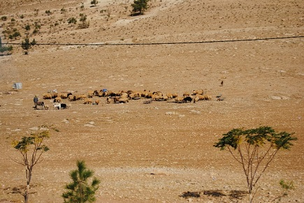 Petra e Gerasa - Journeydraft - AmmanAPetra