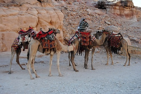 Petra e Gerasa - Journeydraft - PetraCammelli