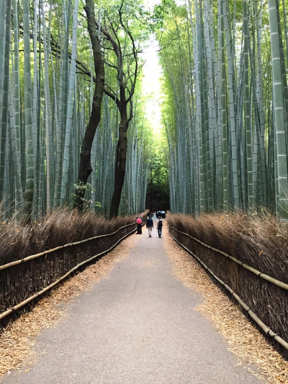 Giappone - Kyoto - Journeydraft - KyotoBambooForest