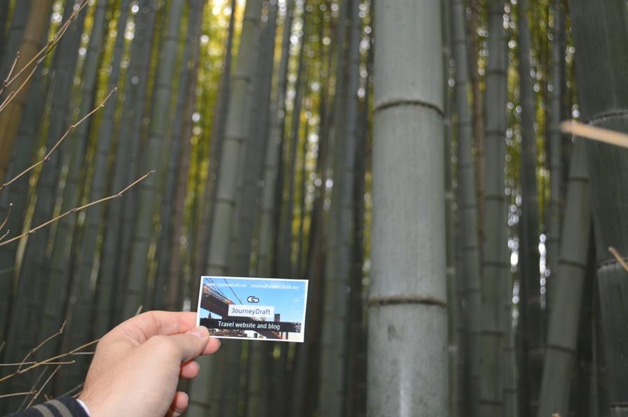 Giappone - Kyoto - Journeydraft - KyotoBambooForestBiglietto