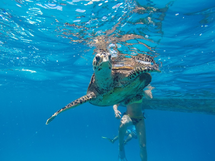 Seychelles: La Digue, le spiagge più belle - Journeydraft - TartarugaSisterIsland