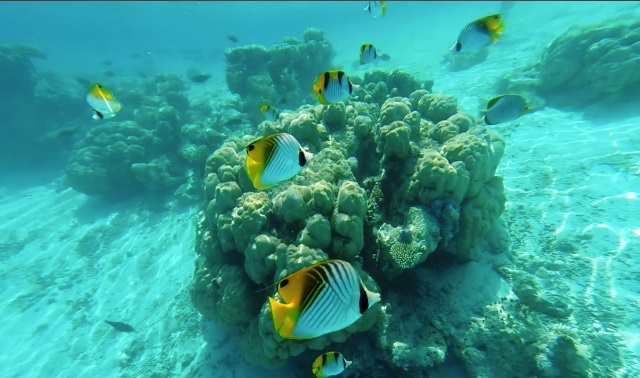 Maldive - Journeydraft