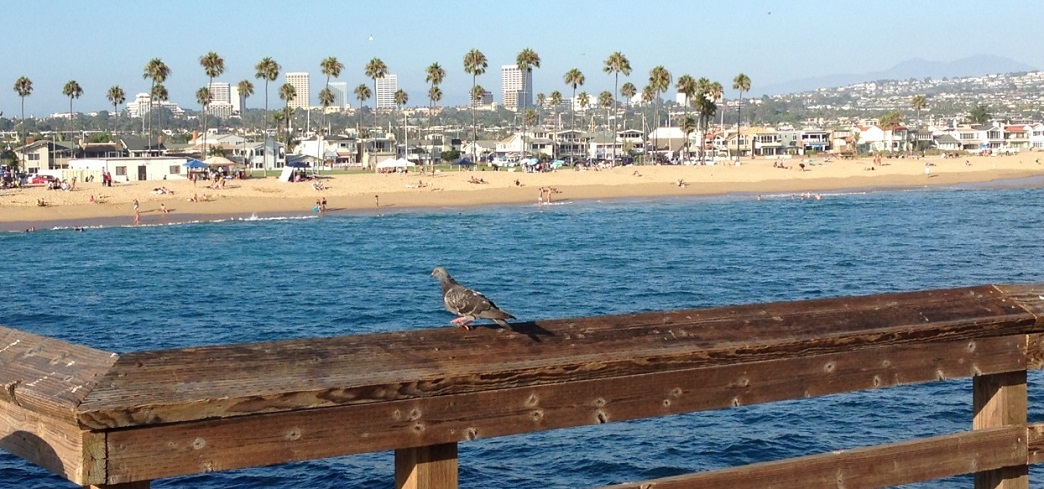 Da San Diego a Santa Barbara - Journeydraft